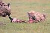 Spotted_Hyena_Mara_Asilia_Kenya0093