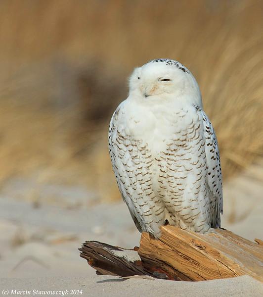 Meet an owl