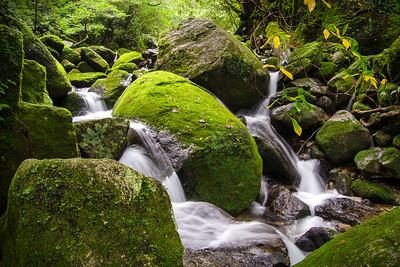 Waterfalls of Shiratani Unsuikyo | Yakushima, Japan