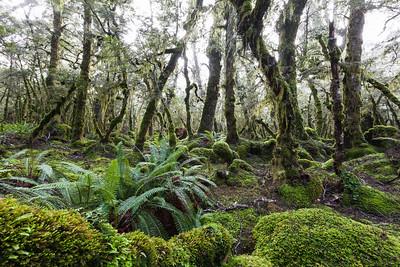 Takitimu Conservation Area