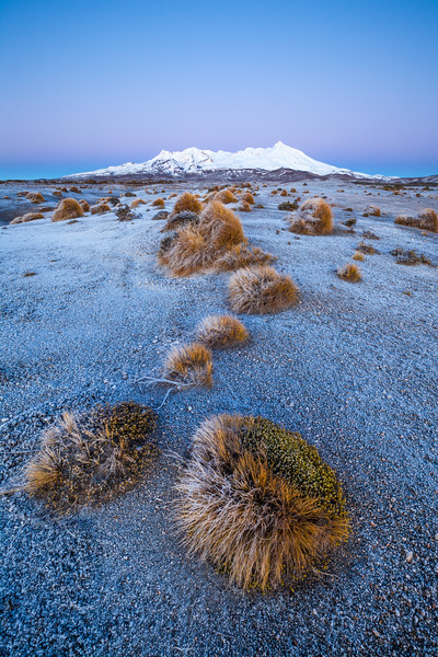 Mount Ruapehu and tussocks, Rangipo Desert (Te Onetapu), Tongariro National Park
