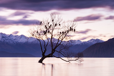 Winter willow tree (Wanaka Tree), Lake Wanaka