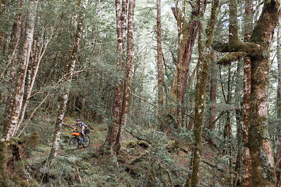 Bikepacker on Big River track, Reefton