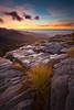 Spaniard (aciphylla) and karst landscape. Mt Arthur, Kahurangi National Park