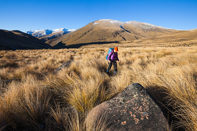Tramping in tussock covered high country, Two Thumb Range, Te Kahui Kaupeka Conservation Area