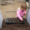 BEN GARVER — THE BERKSHIRE EAGLE<br /> Addie Meister, age 2, fills flats of seedlings at Farm Girl Farm on North Plain Road in Great Barrington. Thursday, April 30, 2020. Farm Girl Farm sells seedlings online for pickup at North Plain Farm and the Coop in Great Barrington.  The seedlings are mostly for vegetable gardens.