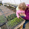 BEN GARVER — THE BERKSHIRE EAGLE<br /> Laura Meister, owner of Farm Girl Farm, and her daughter Addie look at flats of seedlings at Farm Girl Farm on North Plain Road in Great Barrington. Thursday, April 30, 2020. Farm Girl Farm sells seedlings online for pickup at North Plain Farm and the Coop in Great Barrington.  The seedlings are mostly for vegetable gardens.