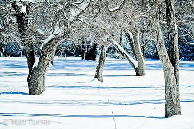 Deering Park Orchard