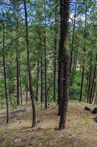Our property. We have a total of 4.2 acres of land and trees.
