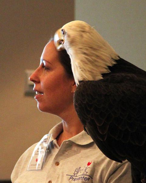 Heather presents Hal the bald eagle