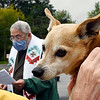 Blessing of the Animals prayer service on the lawn at St. Pius X Church