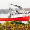 Gull gallery