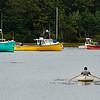Lobsterman rows to dock