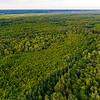 The forest in the Pripiat-Stokhid National Park in the Polesie area, Ukraine. Drone photo. © Daniel Rosengren