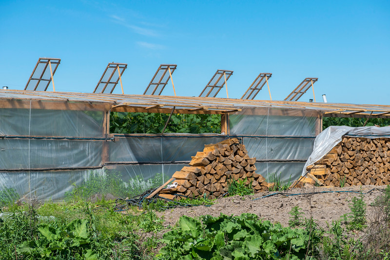 Cucumber plantation is a huge industry around the Polesie area. Cheap greenhouses are built with wood and plastic sheets. In wintertime a large amount of firewood is used for the heating. This need for firewood means a lot of valuable forests are cut down. Polesie area, Belarus. © Daniel Rosengren
