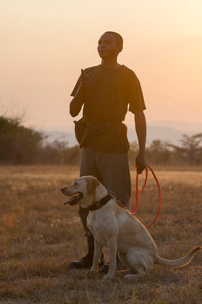 A dog handler with a dog during the daily training session. These dogs are used for anti poaching purposes and are trained to sniff out for example rhino horn, pangolin scales and ammunition. North Luangwa NP. Zambia. © Daniel Rosengren