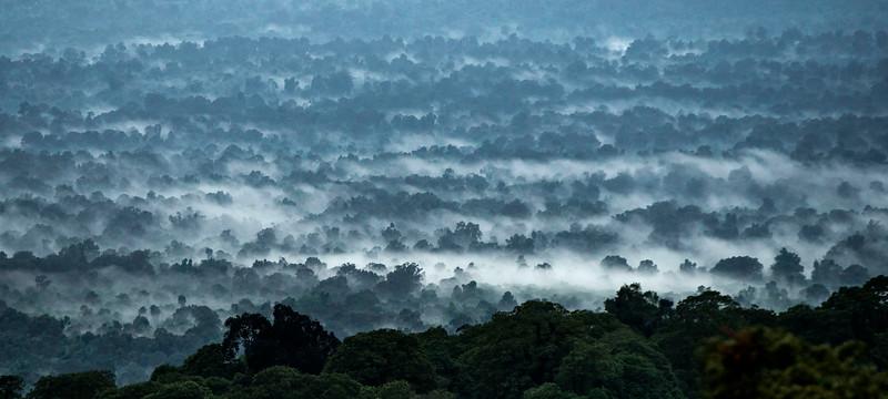 The Harenna Forest, Bale Mountains NP, Ethiopia. © Daniel Rosengren / FZS