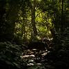 The rainsforest in Mahale National Park, Tanzania. © Daniel Rosengren / FZS