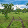 Tracks from a poacher's car going off-road in Selous Game Reserve, Tanzania. © Daniel Rosengren / FZS