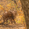 Selous Wildlife and Elephant Census, October 2013