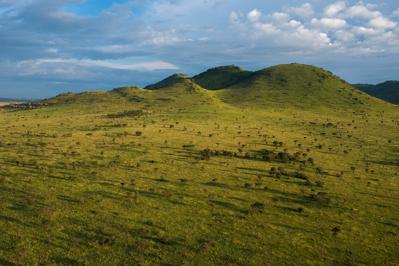 An open woodland landscape in the Serengeti NP, Tanzania. © Daniel Rosengren