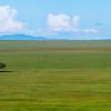 The iconic grass plains of Serengeti NP and a single Sausage Tree. Tanzania. © Daniel Rosengren / FZS