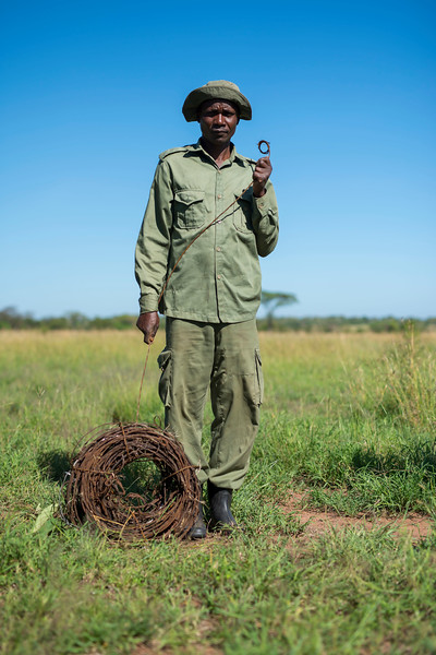 A member of the FZS de-snaring team with a roll of collected snares. Serengeti Ecosystem, Tanzania. © Daniel Rosengren / FZS