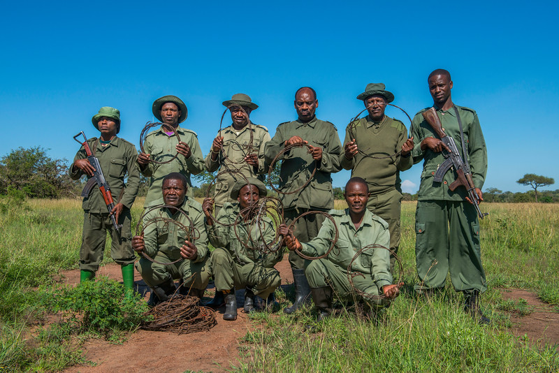 The FZS de-snaring team works hard and efficient and yearly dismantles thousands of snares meant to catch animals. For security, they are always accompanied with TANAPA rangers (here seen at the far left and right). Serengeti Ecosystem, Tanzania. © Daniel Rosengren / FZS