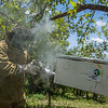 FZS supports communities around their project areas in various ways. Here a beekeeper is blowing smoke on a beehive (one of many donated by FZS) to calm down the bees. Honey production is an example of a good eco friendly way to make a living around protected areas. Photographed near Serengeti National Park, Tanzania. © Daniel Rosengren / FZS