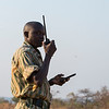 A ranger communication on a radio. North Luangwa National Park, Zambia. © Daniel Rosengren / FZS