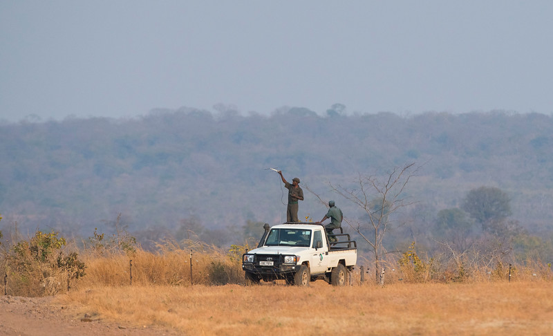 The FZS project in North Luangwa National Park is highly successful in preventing rhino poaching. One of the methods is to fit each rhino with a radio transmitter to better be able to keep track of them. Here rangers are picking up the signal of a rhino. Zambia. © Daniel Rosengren / FZS
