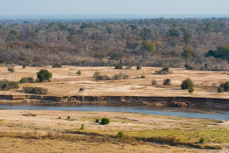 An elephant in the North Luangwa National Park landscape, Zambia. © Daniel Rosengren / FZS