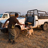 A dog handler with a dog on the daily training session. These dogs are used for anti poaching purposes and are trained to sniff out for example rhino horn, pangolin scales and ammunition. North Luangwa National Park, Zambia. © Daniel Rosengren / FZS