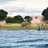 Nsumbu National Park, Zambia. The park is special because it has both terrestrial and lake habitats. Here elephants are seen by the shore of Lake Tanganyika. © Craig Zytkow / FZS