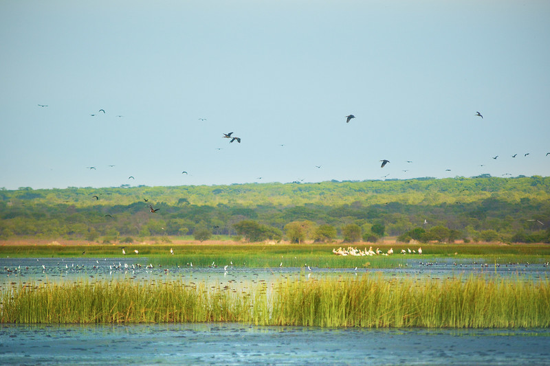 Nsumbu National Park, Zambia. The park is special because it has both terrestrial and lake habitats. © Craig Zytkow / FZS