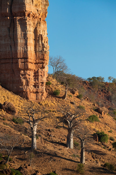 Baobab trees in front of the Chilojo Cliffs.Gonarezhou National Park, Zimbabwe. © Daniel Rosengren / FZS