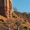 Baobab trees in front of the Chilojo Cliffs.Gonarezhou National Park, Zimbabwe. © Daniel Rosengren / FZS