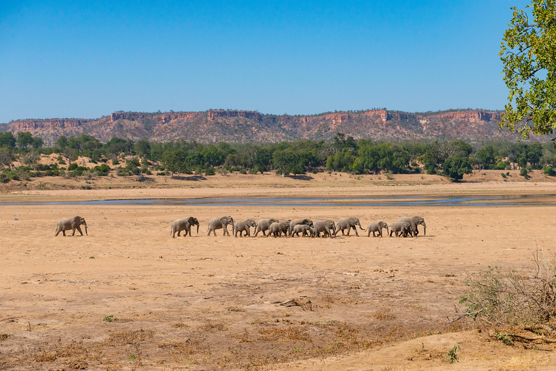 Elephants by the Runde River front of the Chilojo Cliffs in Gonarezhou National Park, Zimbabwe. © Daniel Rosengren / FZS