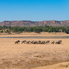 Elephants by the Runde River front of the Chilojo Cliffs in Gonarezhou National Park, Zimbabwe. © Daniel Rosengren / FZS