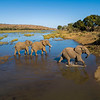 Elephants in the Runde River in Gonarezhou National Park, Zimbabwe. © Daniel Rosengren / FZS