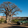 Elsabe and the project car by a Baobab tree in front of the Chilojo Cliffs. Gonarezhou National Park, Zimbabwe. © Daniel Rosengren / FZS