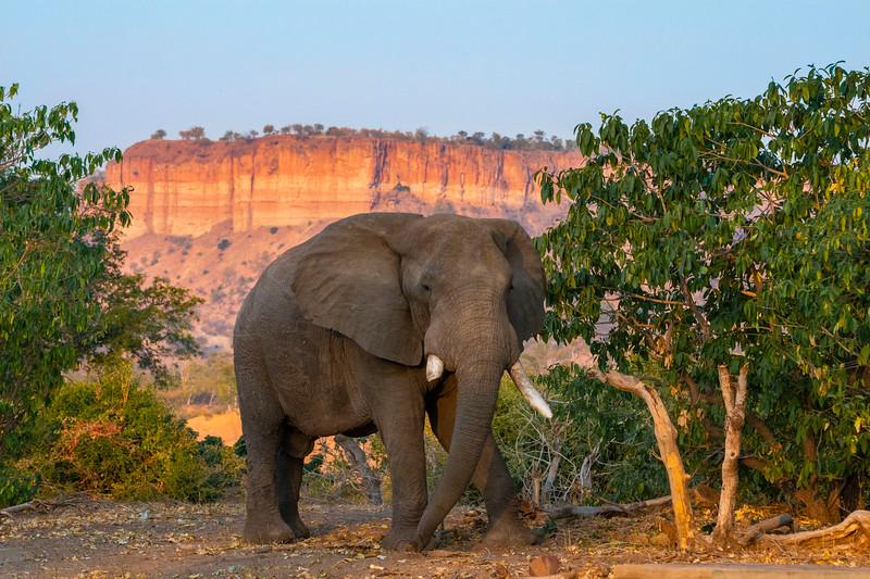 An elephant in front of the Chilojo Cliffs in Gonarezhou National Park, Zimbabwe. © Daniel Rosengren / FZS