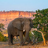 An elephant in front of the Chilojo Cliffs in Gonarezhou National Park, Zimbabwe. © Daniel Rosengren / FZS