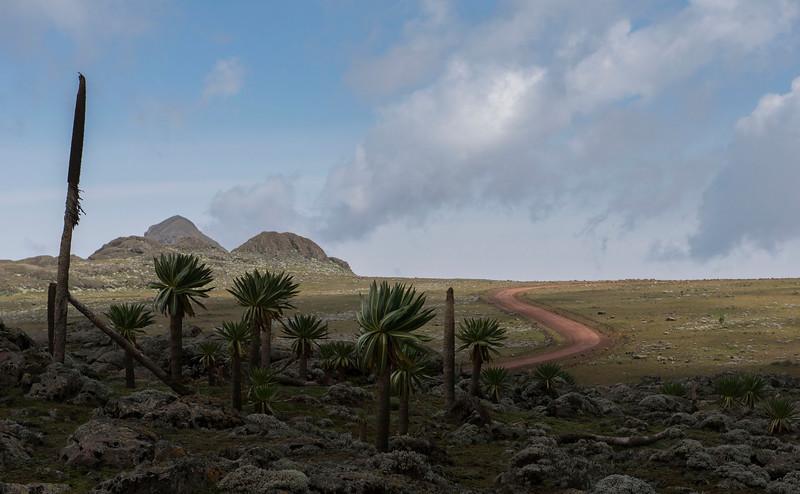 The Sanetti Plateau in Bale Mountains NP,  Ethiopia. © daniel rosengren