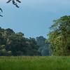 The Harenna Forest in Bale Mountains NP, Ethiopia. © daniel rosengren