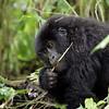 Norbert Guthier<br /> <br /> Virunga