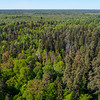 The forest in Bialowieza National Park, Belarus. © Daniel Rosengren / FZS