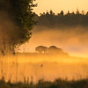 European Bison seen in the fog at sunrise in the Bialowieza National Park, Belarus. © Daniel Rosengren / FZS