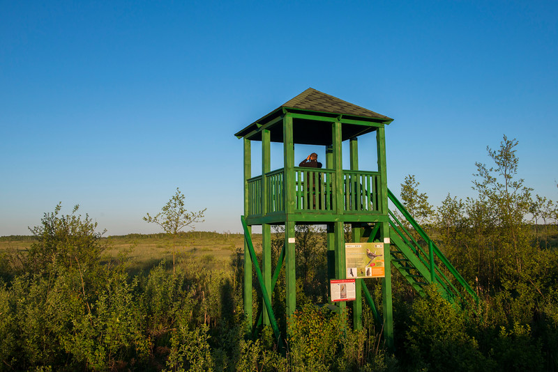 An observation tower to watch animals and birds from. It is possible to see the Aquatic warbler from here. Bialowieza National Park, Belarus. © Daniel Rosengren / FZS