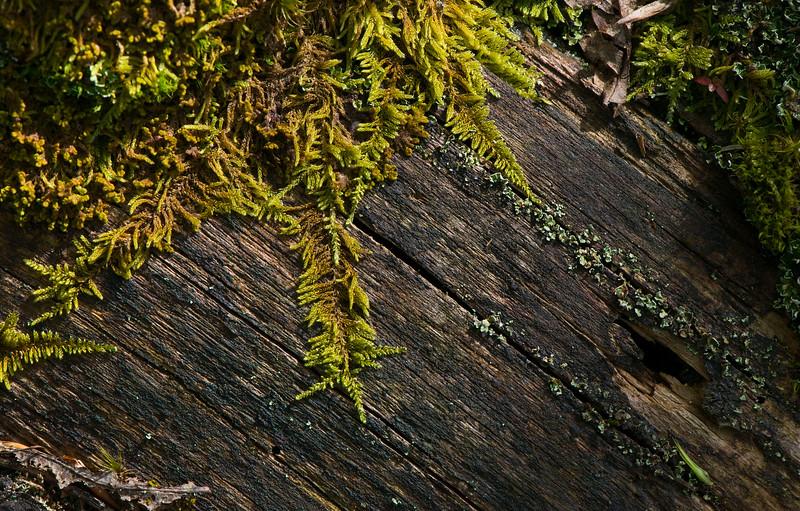 Mosses growing on a dead log in the Bayerischer Wald NP, Germany. © Daniel Rosengren / FZS